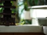 Gecko spy!