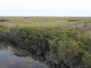 sea of sawgrass