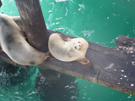 Smiling Sea Lion