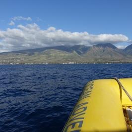 Whale watching on Maui